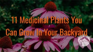 11 Medicinal Plants You Can Grow In Your Backyard