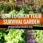 How To Grow Your Survival Garden