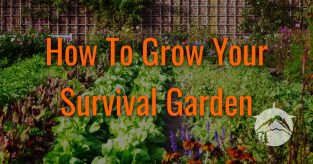 How To Grow Your Survival Garden