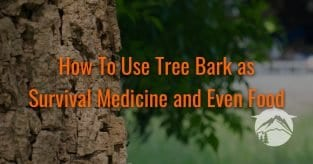How To Use Tree Bark as Survival Medicine and Even Food