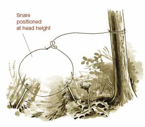 Primitive survival trap